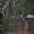 The two campsites west of Numa Creek.- Head of Bowman Lake Campground