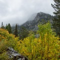 Fall colors under gray rain clouds in Glacier National Park.- Sperry Trailhead to Sperry Chalet