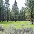 The campground is set in meadows and ponderosa pine forest.- Fallen Leaf Lake Campground