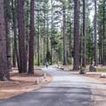 Ponderosa pines provide plentiful shade.- Fallen Leaf Lake Campground