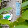 Blue Blazes mark the Superior Hiking Trail- Bean Lake + Bear Lake via the Superior Hiking Trail