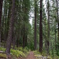 The trail wanders through the Umpqua National Forest.- Lemolo Falls via the Lemolo Falls Trail