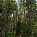 Lemolo Falls Trail in the Umpqua National Forest.- Lemolo Falls via the Lemolo Falls Trail