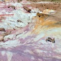 A rabbit running through multicolored layers.- Paint Mines Interpretive Park