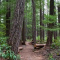 The short trail to Warm Springs Falls in the Umpqua National Forest.- Warm Springs Falls