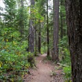 Old-growth trees line the trail out to Warm Springs Falls.- Warm Springs Falls