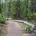 At the end of the trail is a viewing platform.- Warm Springs Falls