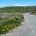 Poppies along the trail.- Bluff Trail Hike