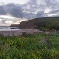 Beach and wildflowers just after sunset.- Davenport Landing Beach