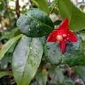 Lots of rain means lots of pretty flowering plants.- Nounou Mountain via the East Ridge