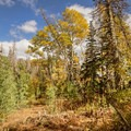 Fall begins along the Mount Nebo Trail.- Mount Nebo + North Peak