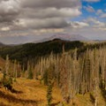 Looking to the north from the trail. Notice the dead conifers.- Mount Nebo + North Peak