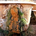 Mineral build up and algae decorate the tubs.- Mystic Hot Springs