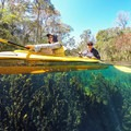 Clear water at Big Blue Spring.- Wacissa River