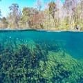 Clear water at Big Blue Spring on the Wacissa River.- Wacissa River