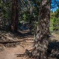Few shaded areas along the trail.- Mammoth Rock Trail