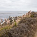 The trail winds along the bluffs.- Jade Cove