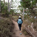 Walking through the forested North Shore Trail.- North Shore Trail + Whaler's Knoll