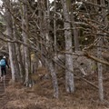 The cypress trees have an eerie feeling about them.- North Shore Trail + Whaler's Knoll