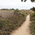 A path leading to another parking area passes through poison oak.- North Shore Trail + Whaler's Knoll