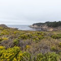 Looking out into Headland Cove over some wildflowers.- Sea Lion Point + Sand Hill Trails
