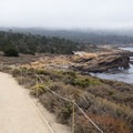 Sand Hill Trail leads along the coast.- Sea Lion Point + Sand Hill Trails