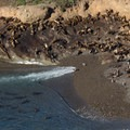 Sea lions packed onto the beach.- Sea Lion Point + Sand Hill Trails