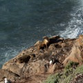 California Sea Lions bask in the sun.- Sea Lion Point + Sand Hill Trails