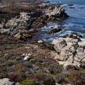 Point Lobos has some rugged sections of coast.- Granite Point + Moss Cove Trails