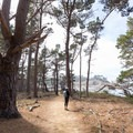 Hiking back through the pine trees.- Granite Point + Moss Cove Trails