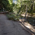 The path leads along the Big Sur River for a short while.- Buzzard's Roost Trail