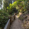 The trail begins to gain elevation. - Buzzard's Roost Trail