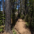 A fire in 2013 burned some patches of forest along this trail.- Buzzard's Roost Trail