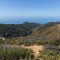 Ocean view from Buzzard's Point.- Buzzard's Roost Trail