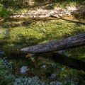 Big Sur River is a great spot for a quick swim.- Buzzard's Roost Trail