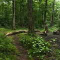 Campsite at the summit.- Chimney Mountain
