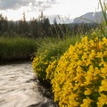 Wildflowers line the sides of the creek.- Kings Creek Meadow