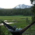 Relaxing on the fringe of the meadow.- Kings Creek Meadow