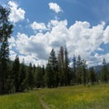One of several meadows along the hike in.- Horseshoe + Ward Lakes via Swift Creek Trail