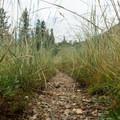 The rocky trail after a rain storm.- Horseshoe + Ward Lakes via Swift Creek Trail