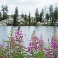 Wildflowers growing along Horseshoe Lake.- Horseshoe + Ward Lakes via Swift Creek Trail