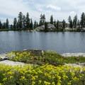 More wildflowers along Horseshoe Lake.- Horseshoe + Ward Lakes via Swift Creek Trail
