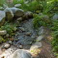 One of the several small creek crossings. - Lilypad Lake Via Poison Canyon Trail