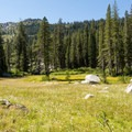 A large meadow on the way to Lilypad Lake.- Lilypad Lake Via Poison Canyon Trail