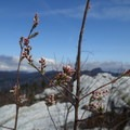 Spring is on the way.- East Rim Trail