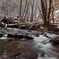 A March snow brings contrast to Elliott Creek.- University Falls