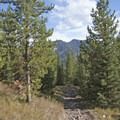 The Hood Creek Trail loops back down in the forest.- Hood Creek