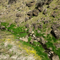 Umtanum Creek flows along the trail.- Umtanum Ridge Crest Trail