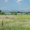 View of the Front Range at Cherry Creek State Park.- Cherry Creek State Park