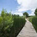 Boardwalk on the Pipeline Trail, Cherry Creek State Park.- Wetland Loop Trail Hike